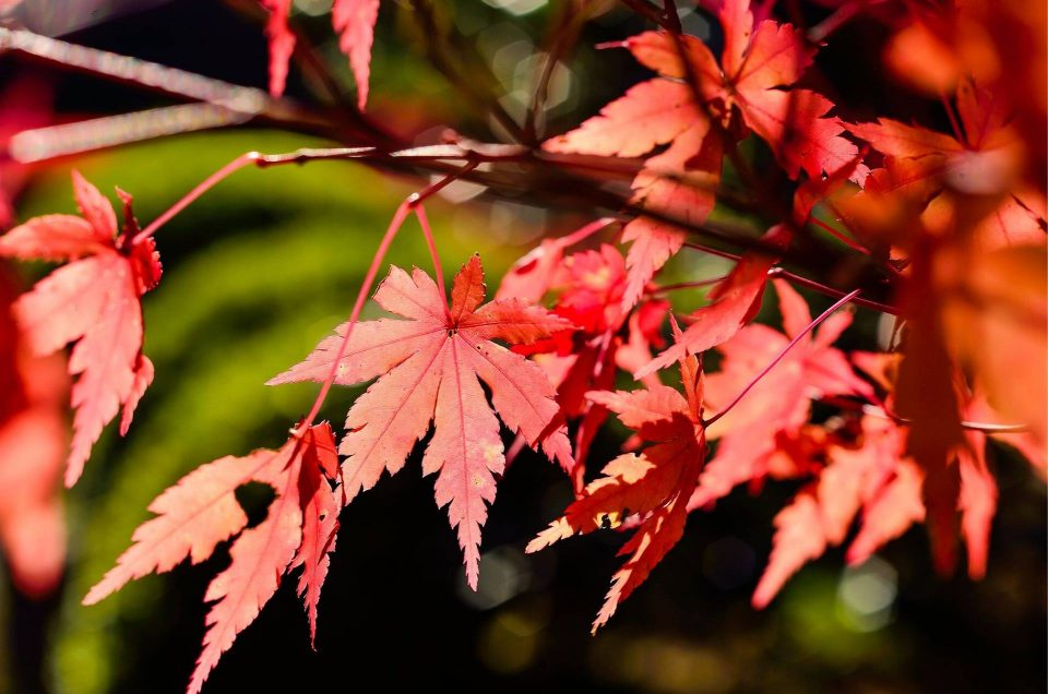Aki, l'autunno giapponese