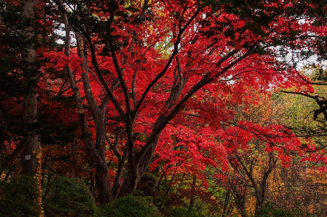 autunno in hokkaido